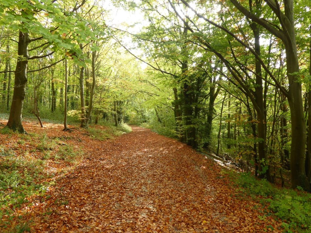 Autumn Leaves, South Downs Way